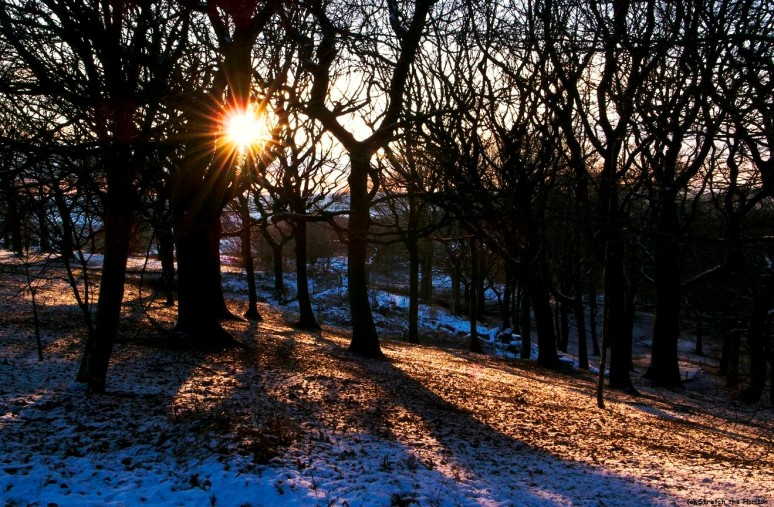 Winter Sun flare