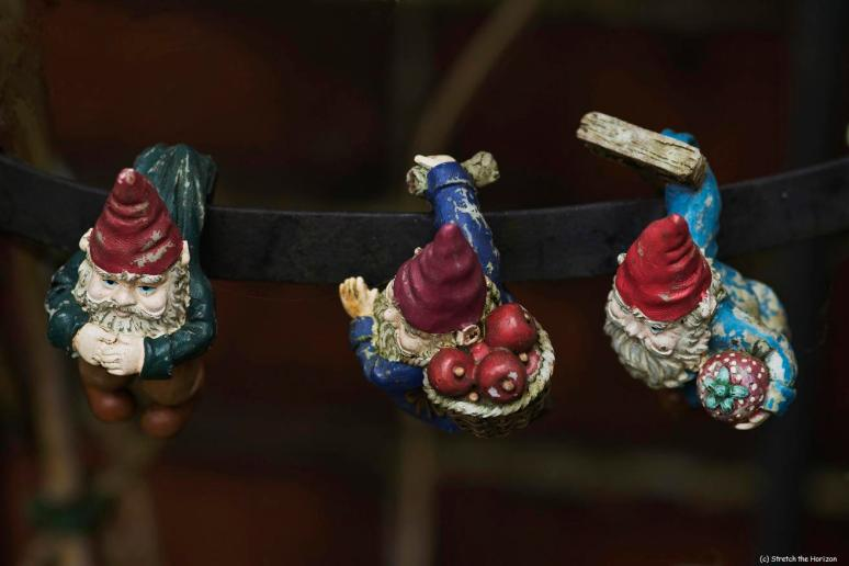 Three dangling Gnomes