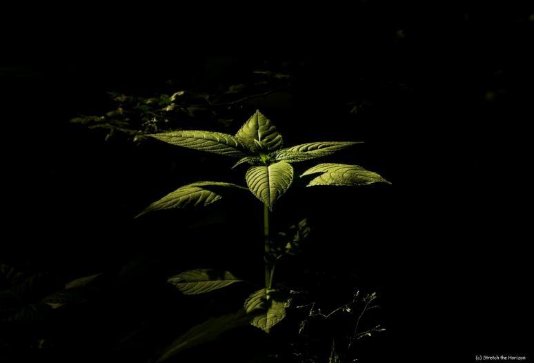 Down in the dark...