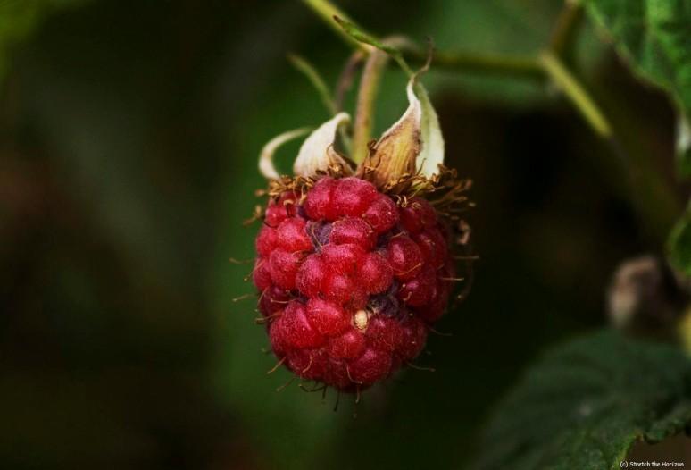 Forgotten fruit